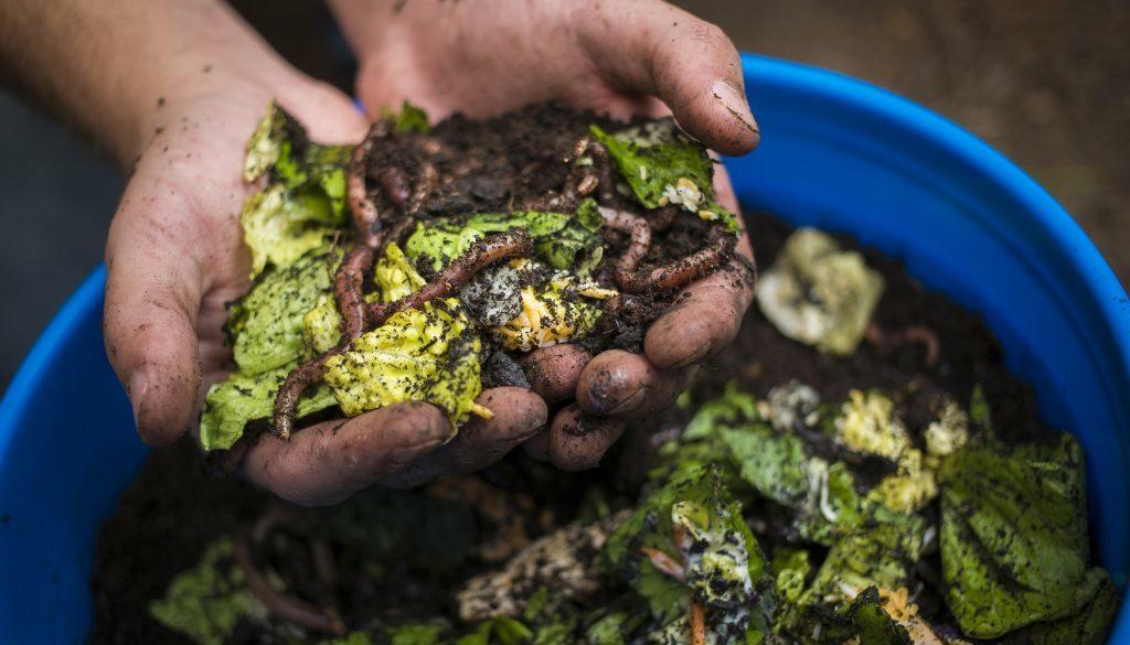 composting-cafnr